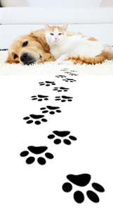 pet-odor-carpet-stains