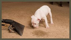 pet-stain-odor-removal